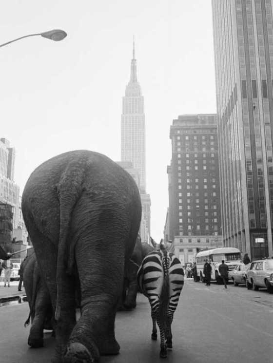 circus-animals-on-33rd-street